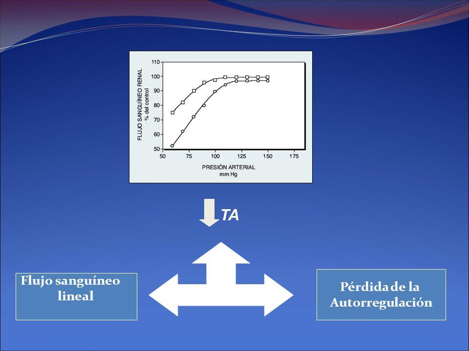TA Pérdida de la Autorregulación Flujo sanguíneo lineal