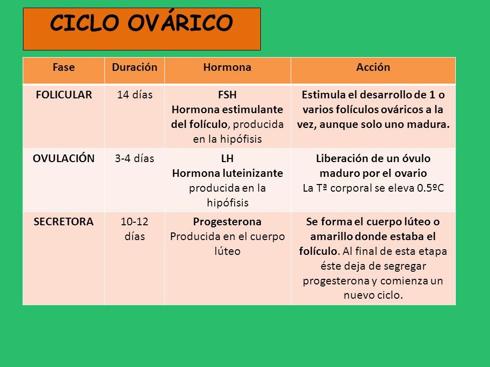 Liberación de un óvulo maduro por el ovario