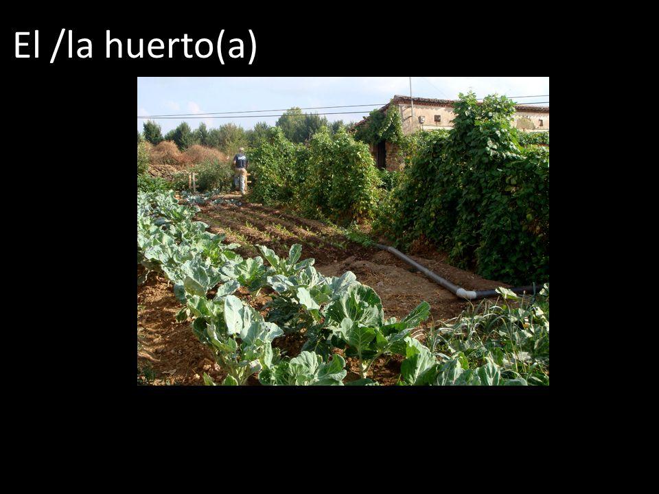 El /la huerto(a)