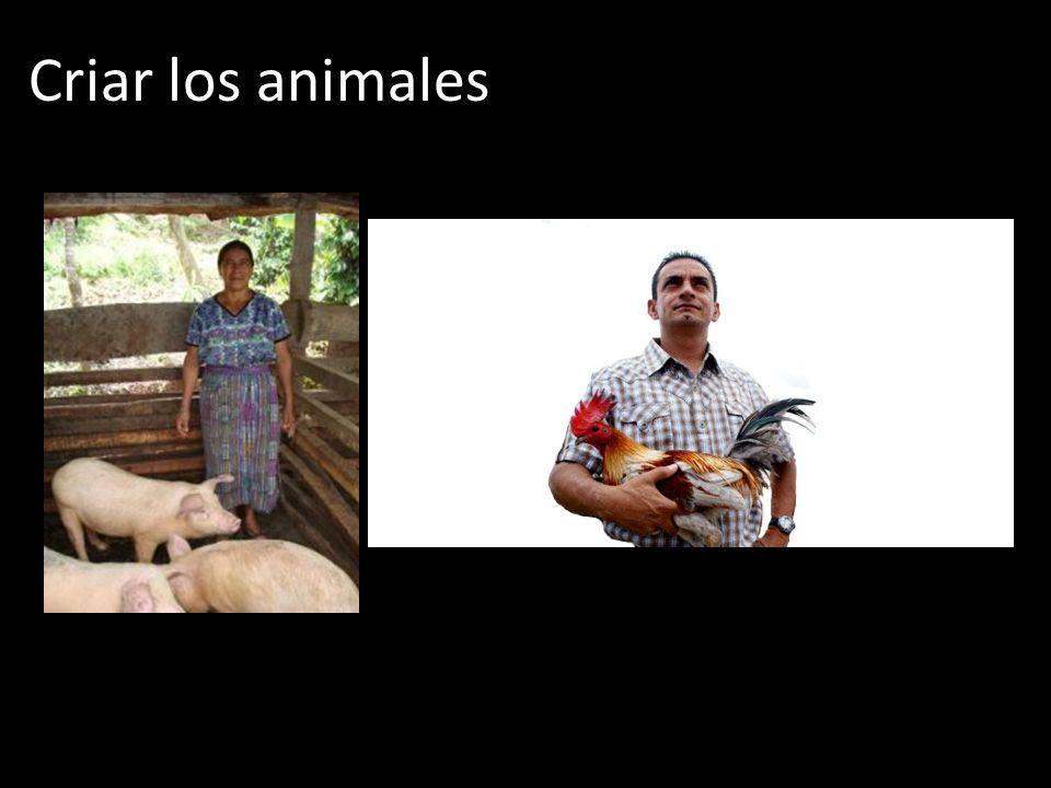 Criar los animales