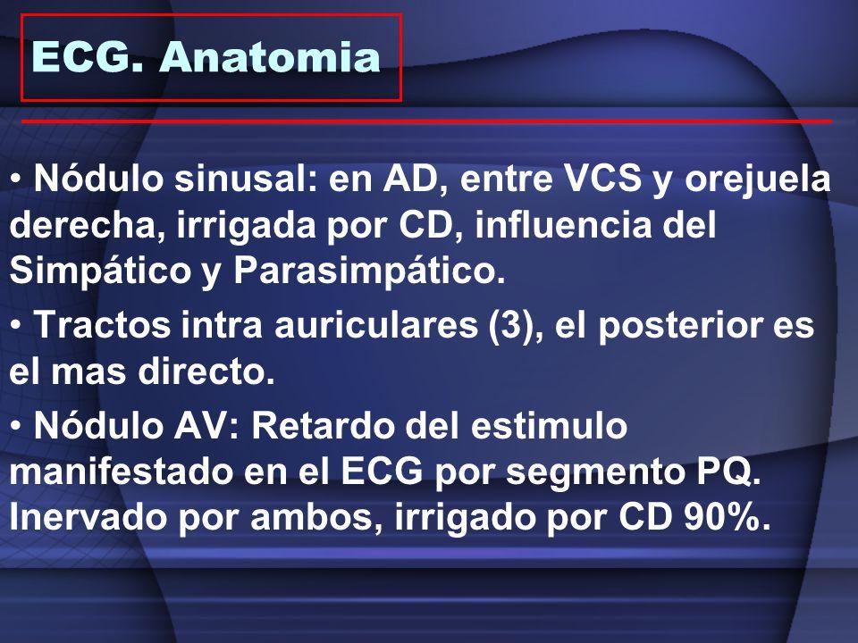ECG. Anatomia Nódulo sinusal: en AD, entre VCS y orejuela derecha, irrigada por CD, influencia del Simpático y Parasimpático.