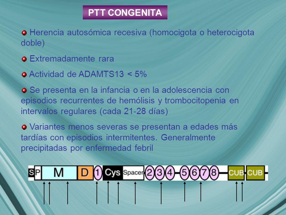 PTT CONGENITA Herencia autosómica recesiva (homocigota o heterocigota doble) Extremadamente rara. Actividad de ADAMTS13 < 5%