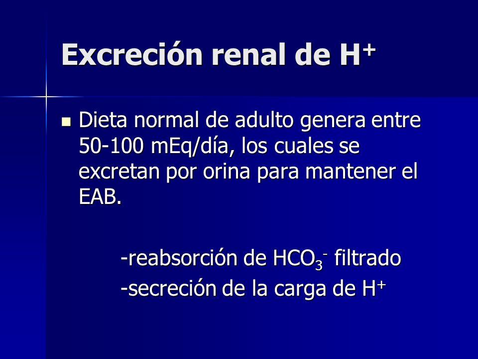 Excreción renal de H+ Dieta normal de adulto genera entre 50-100 mEq/día, los cuales se excretan por orina para mantener el EAB.