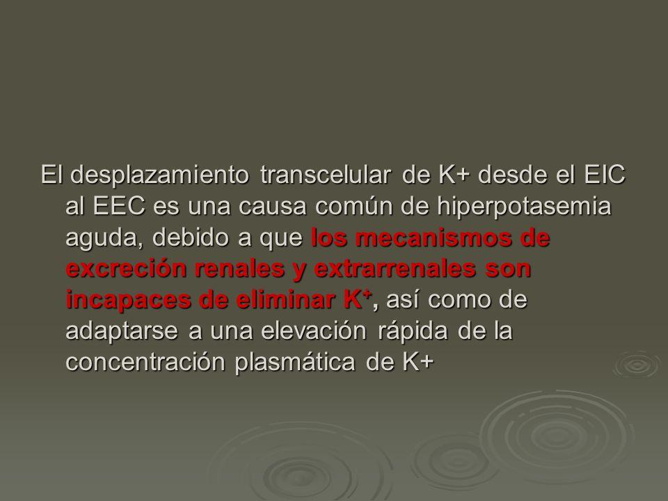 El desplazamiento transcelular de K+ desde el EIC al EEC es una causa común de hiperpotasemia aguda, debido a que los mecanismos de excreción renales y extrarrenales son incapaces de eliminar K+, así como de adaptarse a una elevación rápida de la concentración plasmática de K+