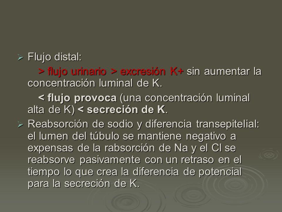 Flujo distal: > flujo urinario > excresión K+ sin aumentar la concentración luminal de K.
