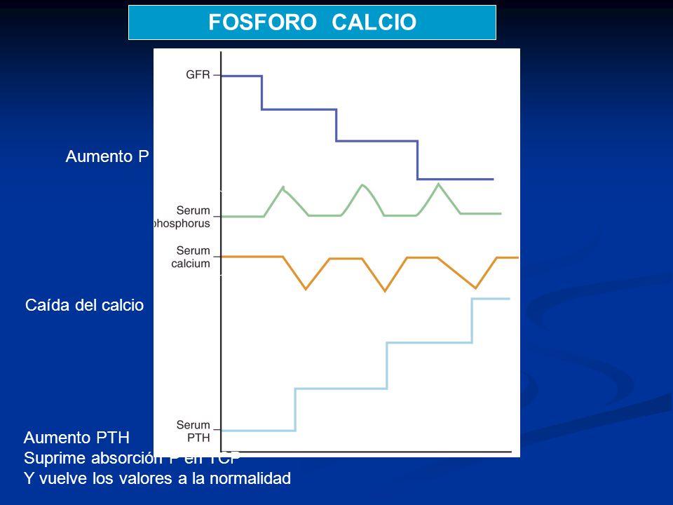 FOSFORO CALCIO Aumento P Caída del calcio Aumento PTH