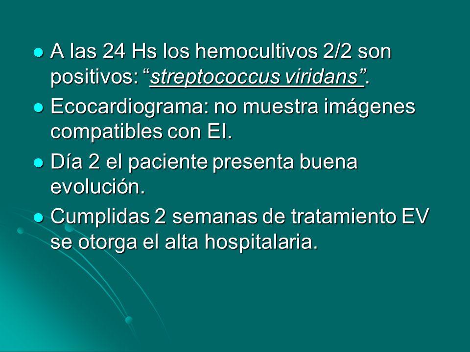 A las 24 Hs los hemocultivos 2/2 son positivos: streptococcus viridans .