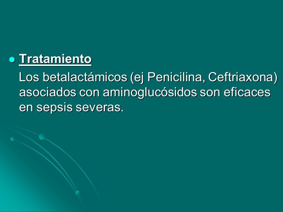TratamientoLos betalactámicos (ej Penicilina, Ceftriaxona) asociados con aminoglucósidos son eficaces en sepsis severas.