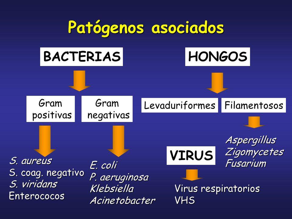 Patógenos asociados BACTERIAS HONGOS VIRUS Gram positivas Gram