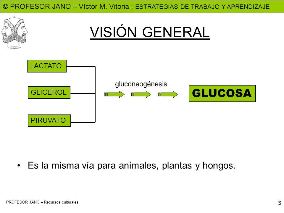 VISIÓN GENERAL GLUCOSA