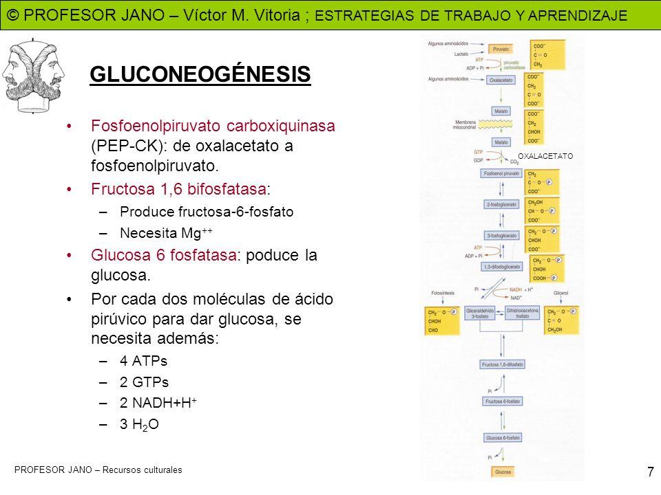 GLUCONEOGÉNESISFosfoenolpiruvato carboxiquinasa (PEP-CK): de oxalacetato a fosfoenolpiruvato. Fructosa 1,6 bifosfatasa: