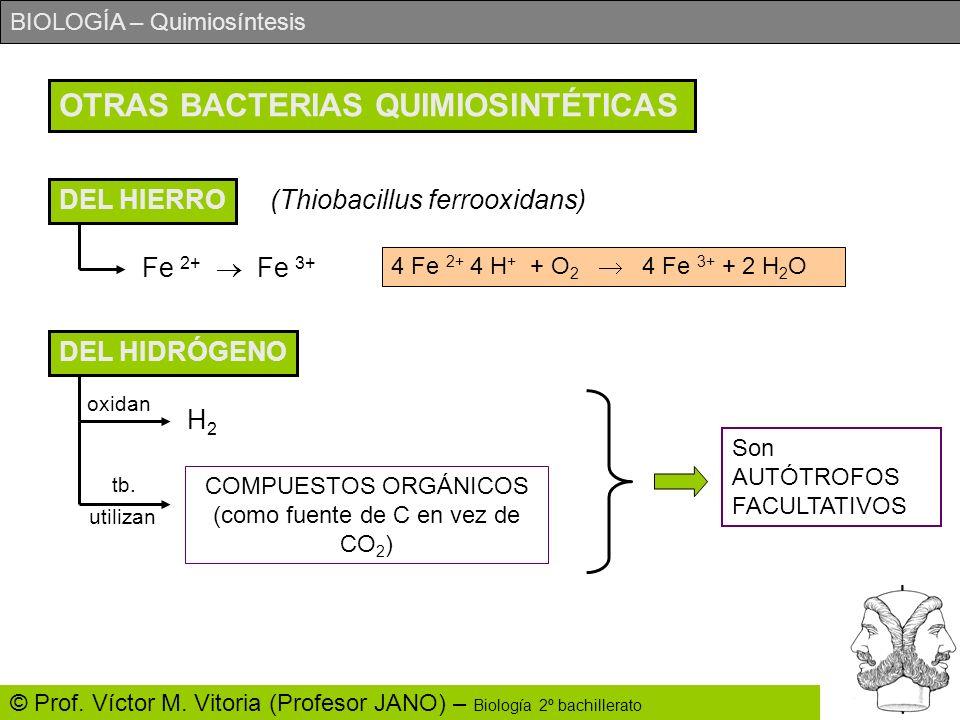 COMPUESTOS ORGÁNICOS (como fuente de C en vez de CO2)