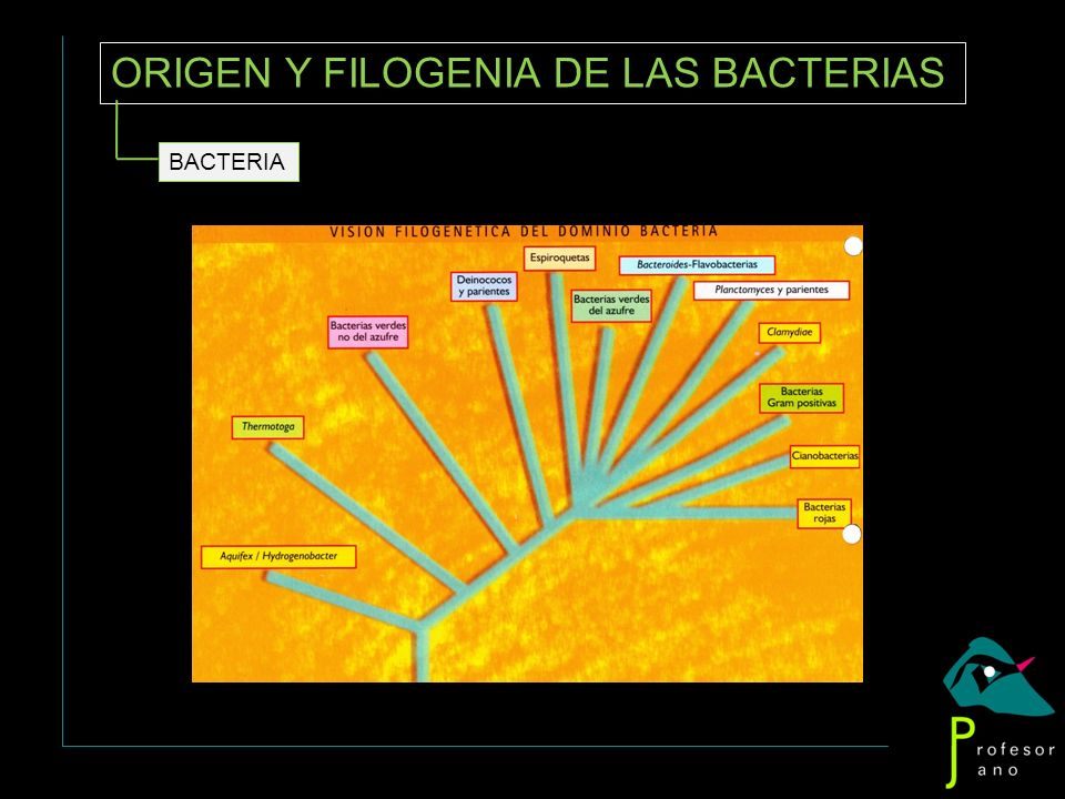 ORIGEN Y FILOGENIA DE LAS BACTERIAS