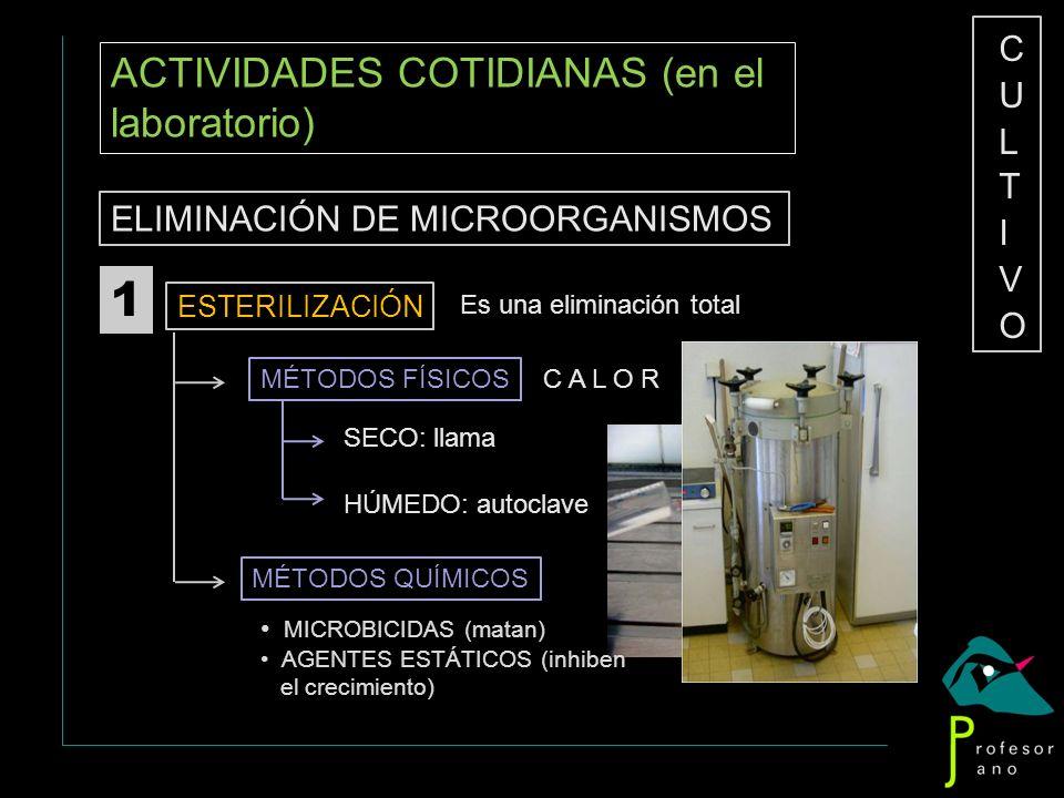 1 ACTIVIDADES COTIDIANAS (en el laboratorio) CULTIVO