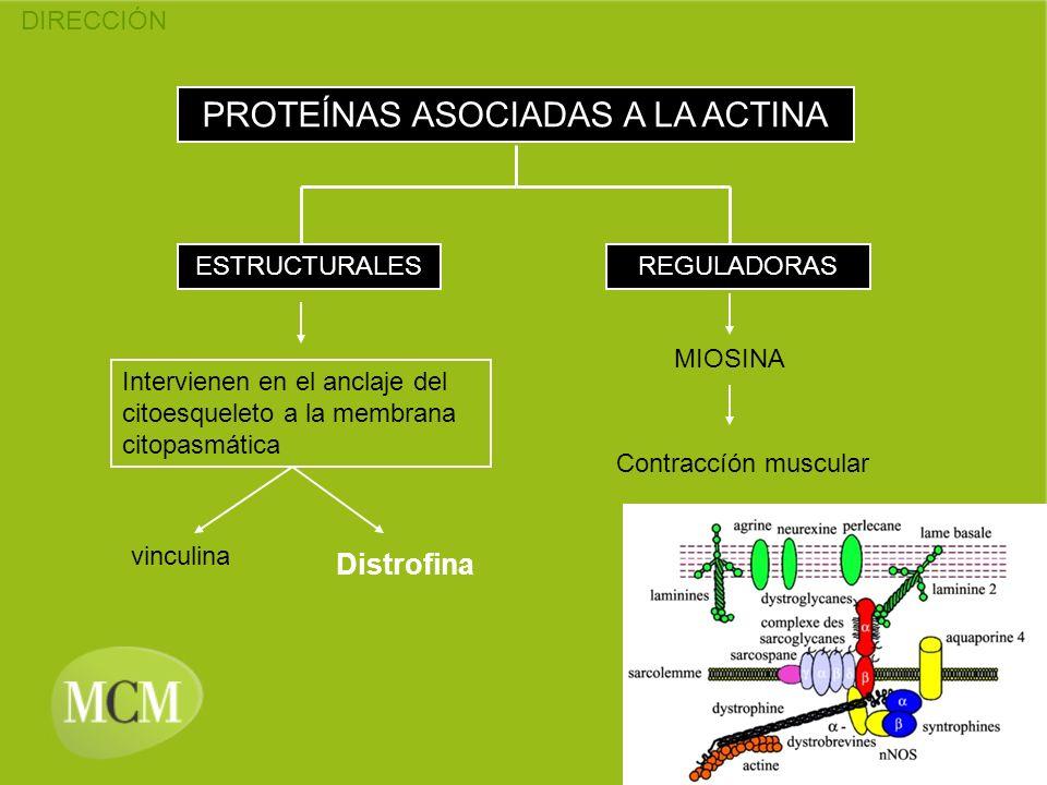 PROTEÍNAS ASOCIADAS A LA ACTINA