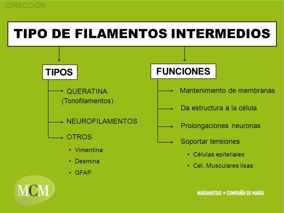 TIPO DE FILAMENTOS INTERMEDIOS
