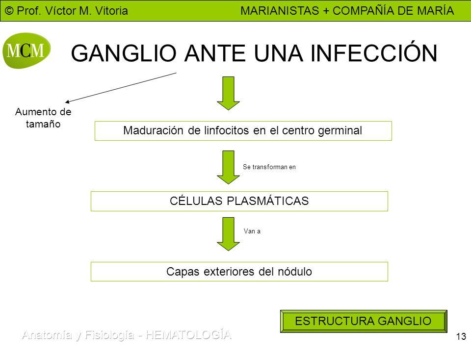 GANGLIO ANTE UNA INFECCIÓN