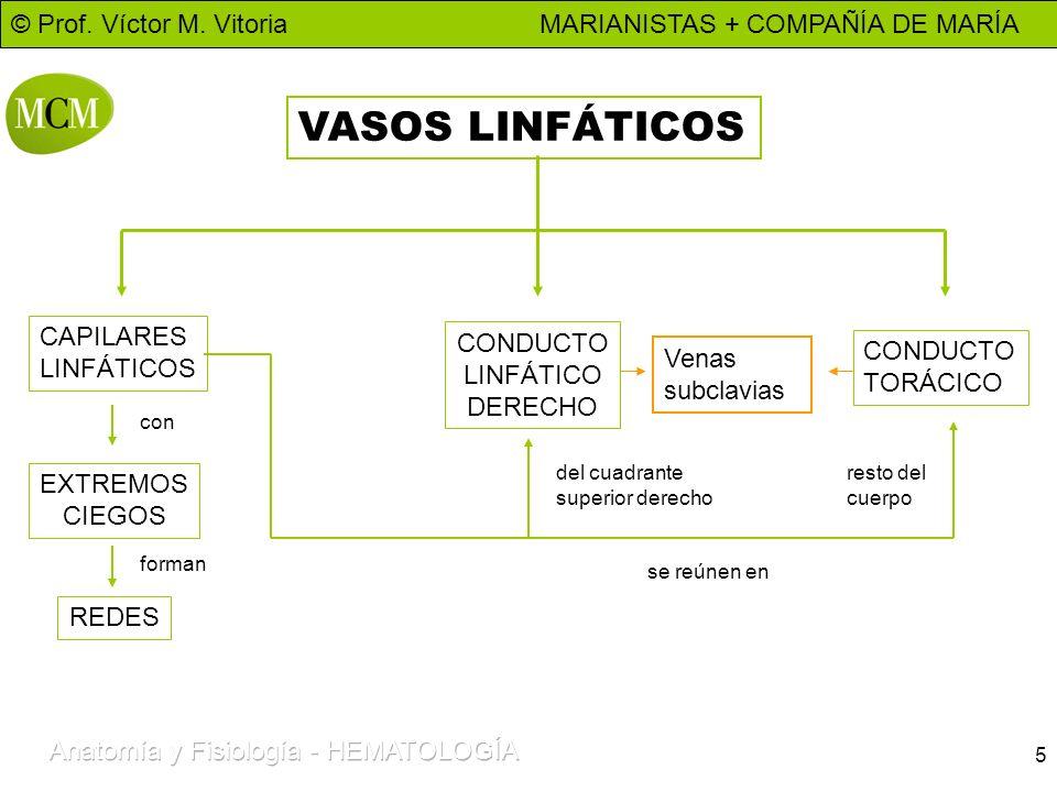 VASOS LINFÁTICOS CAPILARES CONDUCTO LINFÁTICOS CONDUCTO LINFÁTICO