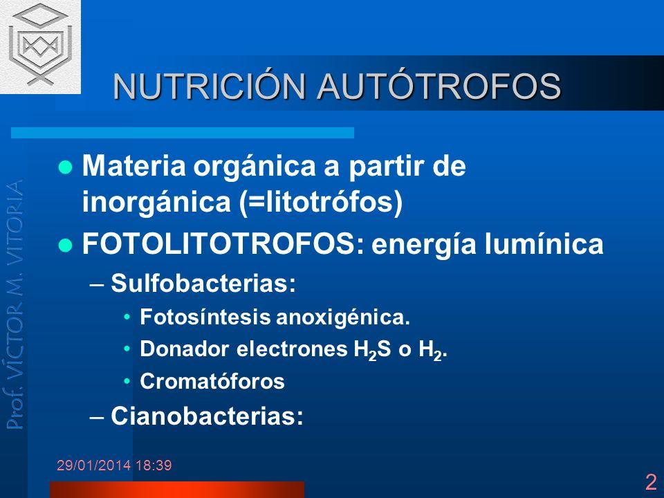 NUTRICIÓN AUTÓTROFOS Materia orgánica a partir de inorgánica (=litotrófos) FOTOLITOTROFOS: energía lumínica.