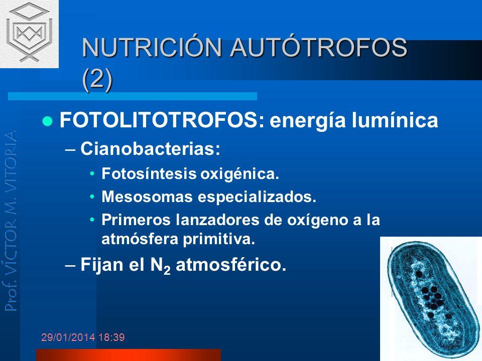 NUTRICIÓN AUTÓTROFOS (2)