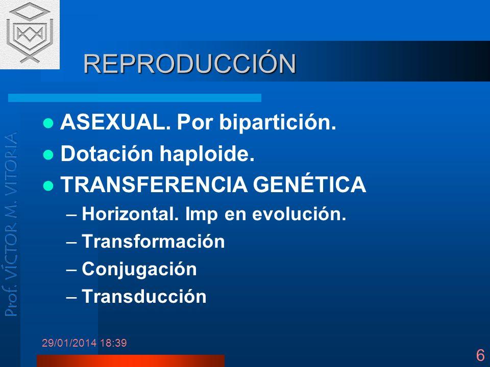 REPRODUCCIÓN ASEXUAL. Por bipartición. Dotación haploide.