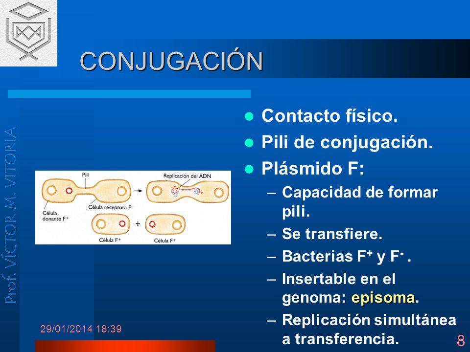 CONJUGACIÓN Contacto físico. Pili de conjugación. Plásmido F: