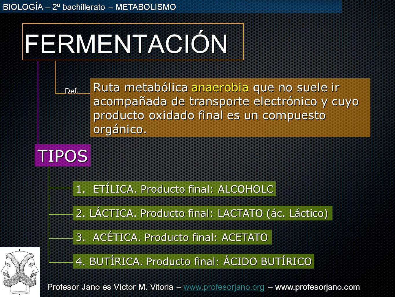 FERMENTACIÓNRuta metabólica anaerobia que no suele ir acompañada de transporte electrónico y cuyo producto oxidado final es un compuesto orgánico.