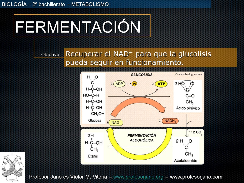 FERMENTACIÓN Recuperar el NAD+ para que la glucolisis pueda seguir en funcionamiento. Objetivo