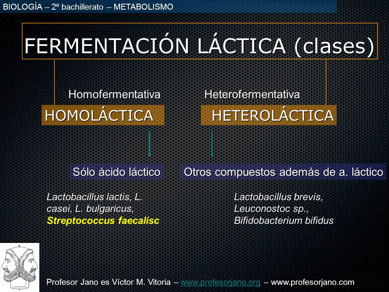FERMENTACIÓN LÁCTICA (clases)