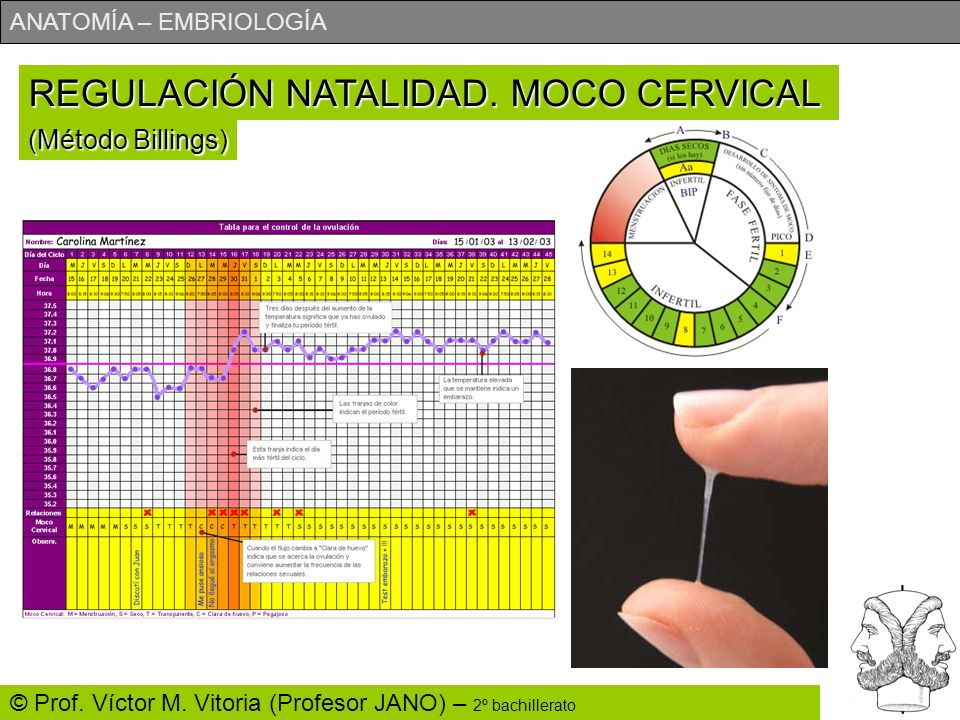 REGULACIÓN NATALIDAD. MOCO CERVICAL