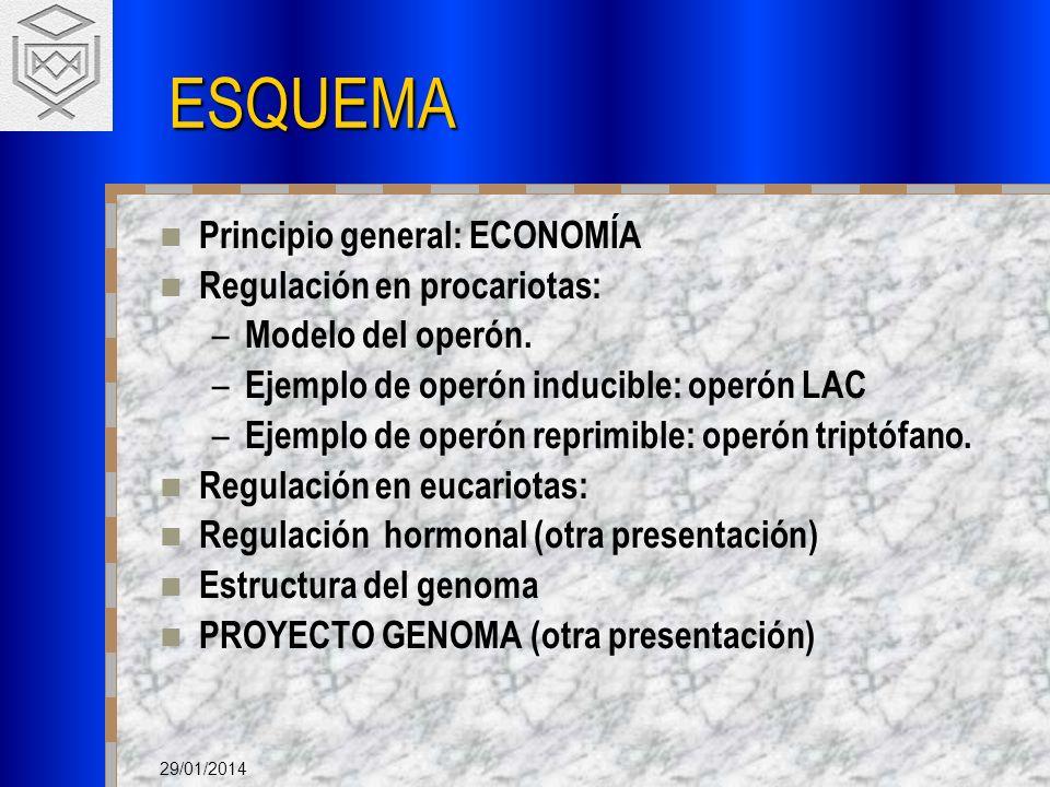ESQUEMA Principio general: ECONOMÍA Regulación en procariotas: