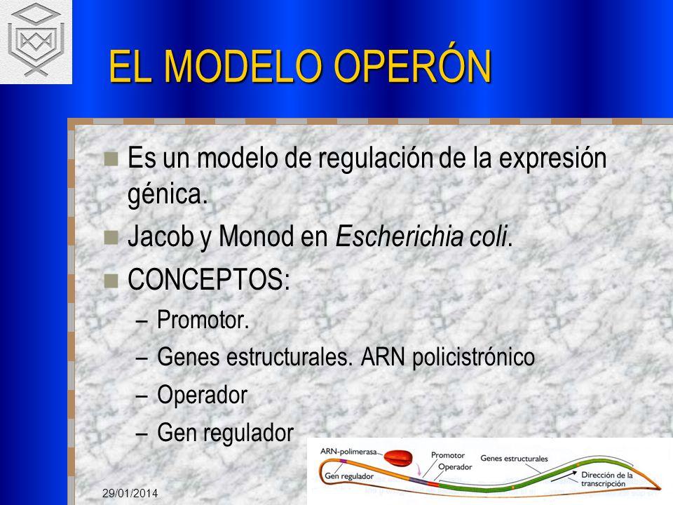 EL MODELO OPERÓN Es un modelo de regulación de la expresión génica.