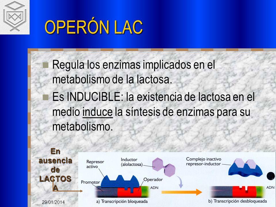 OPERÓN LAC Regula los enzimas implicados en el metabolismo de la lactosa.