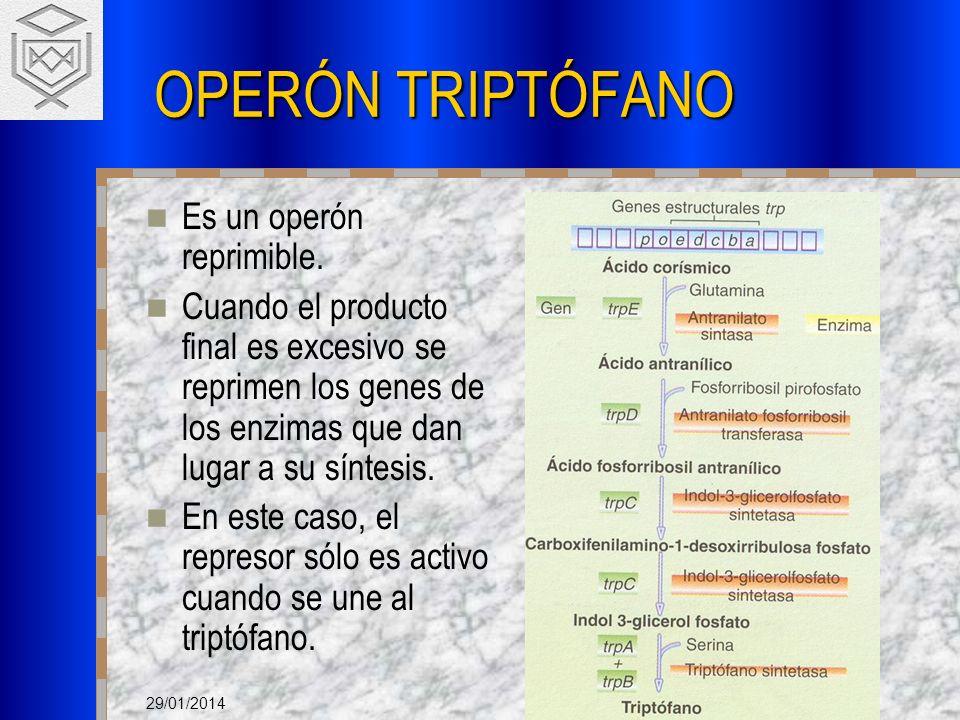 OPERÓN TRIPTÓFANO Es un operón reprimible.
