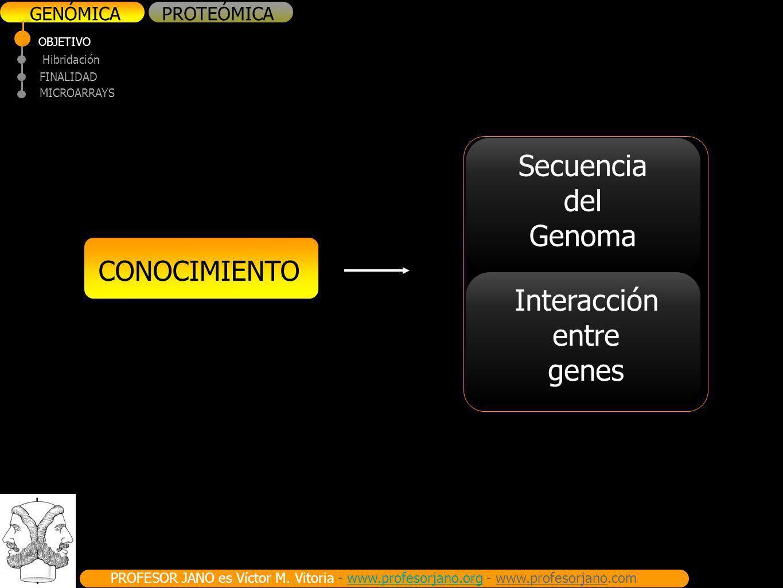 Secuencia del Genoma Interacción entre genes CONOCIMIENTO GENÓMICA