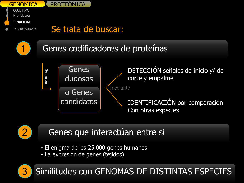 1 2 3 Se trata de buscar: Genes codificadores de proteínas