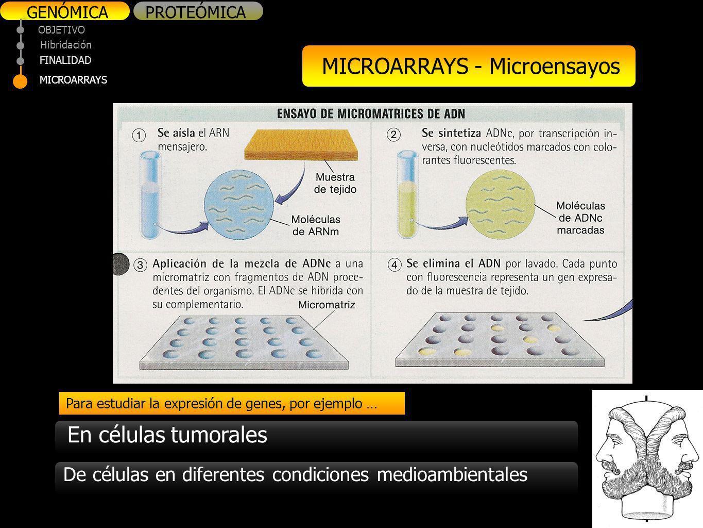 MICROARRAYS - Microensayos
