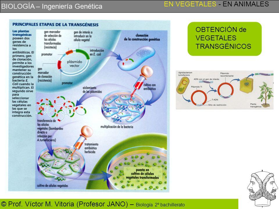 BIOLOGÍA – Ingeniería Genética