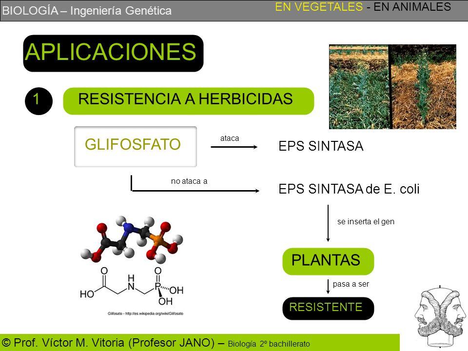APLICACIONES 1 RESISTENCIA A HERBICIDAS GLIFOSFATO PLANTAS EPS SINTASA