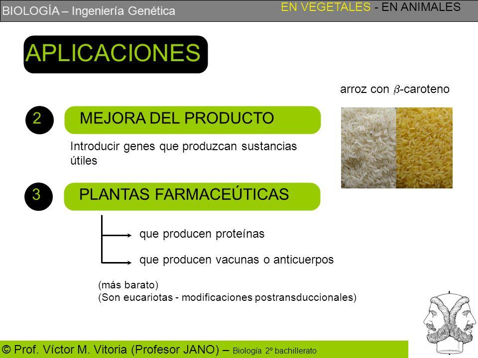 APLICACIONES 2 MEJORA DEL PRODUCTO 3 PLANTAS FARMACEÚTICAS