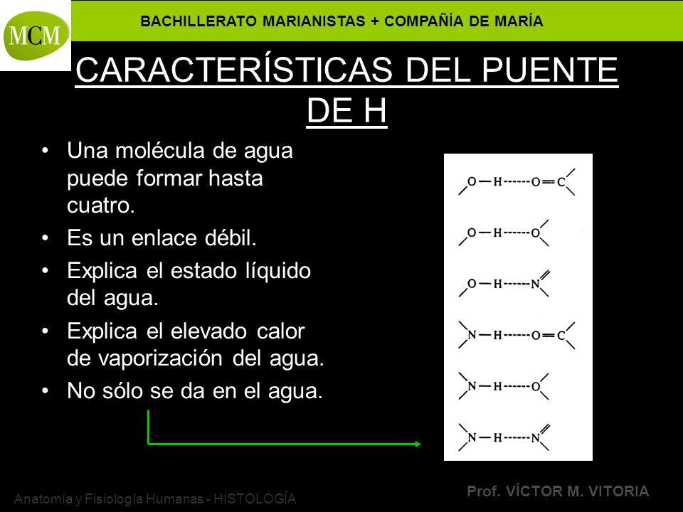 CARACTERÍSTICAS DEL PUENTE DE H