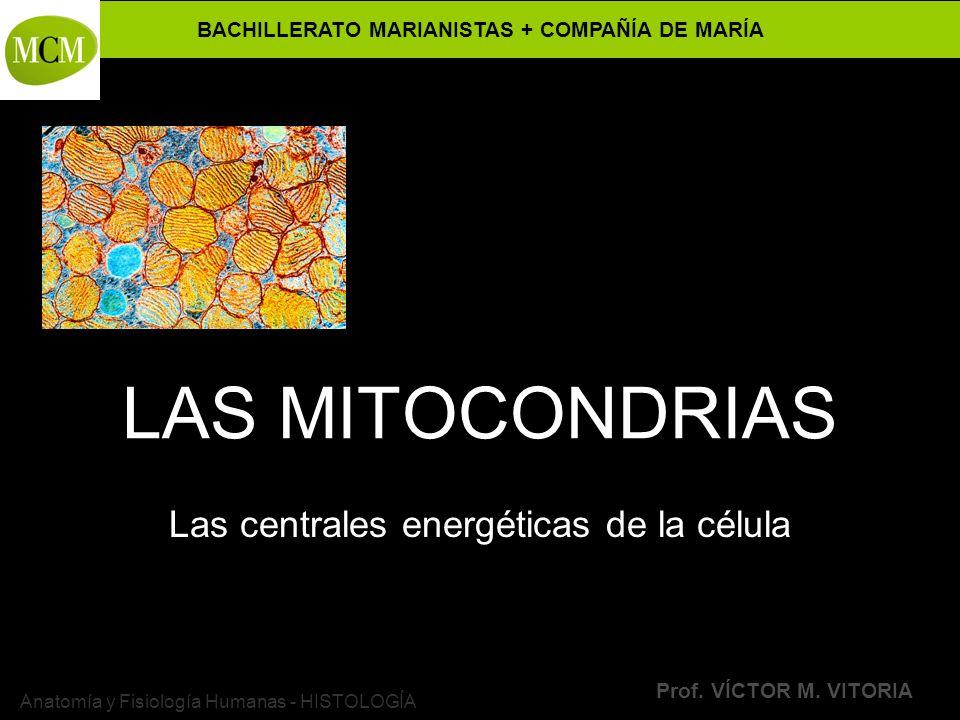 Las centrales energéticas de la célula