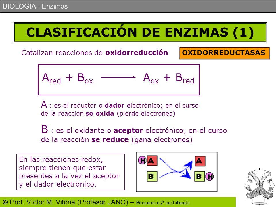 CLASIFICACIÓN DE ENZIMAS (1)