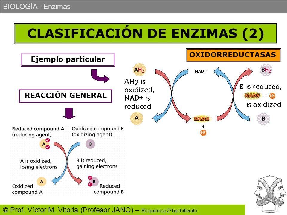 CLASIFICACIÓN DE ENZIMAS (2)