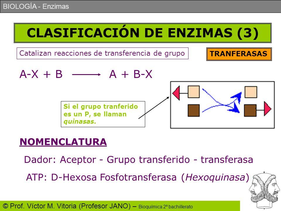 CLASIFICACIÓN DE ENZIMAS (3)