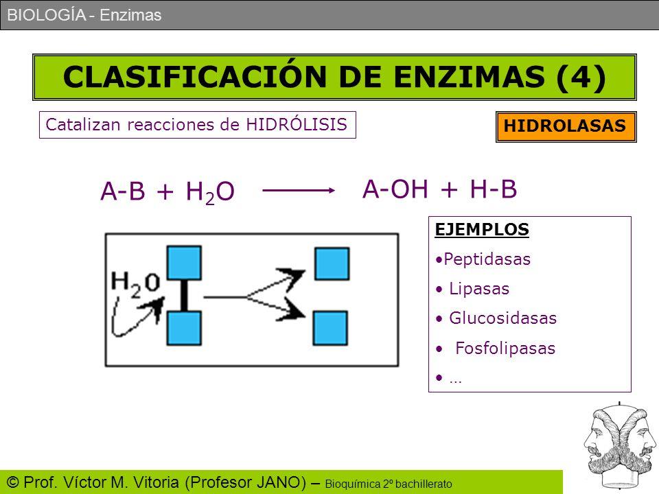 CLASIFICACIÓN DE ENZIMAS (4)