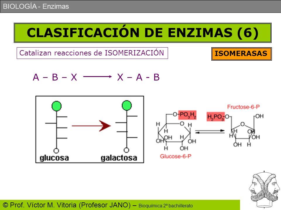 CLASIFICACIÓN DE ENZIMAS (6)