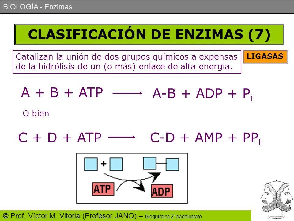 CLASIFICACIÓN DE ENZIMAS (7)