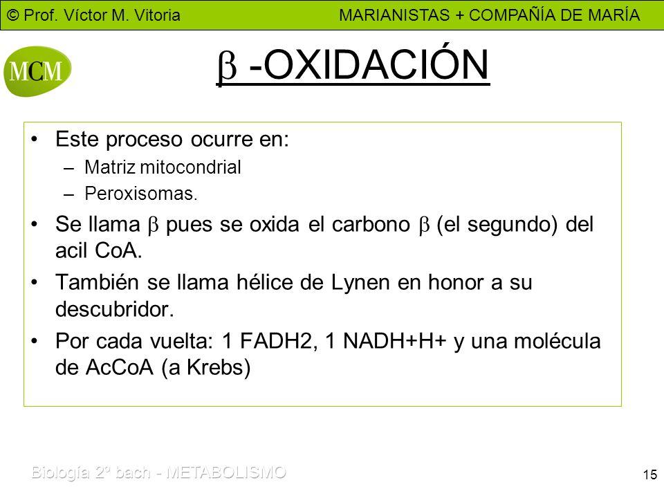 b -OXIDACIÓN Este proceso ocurre en: