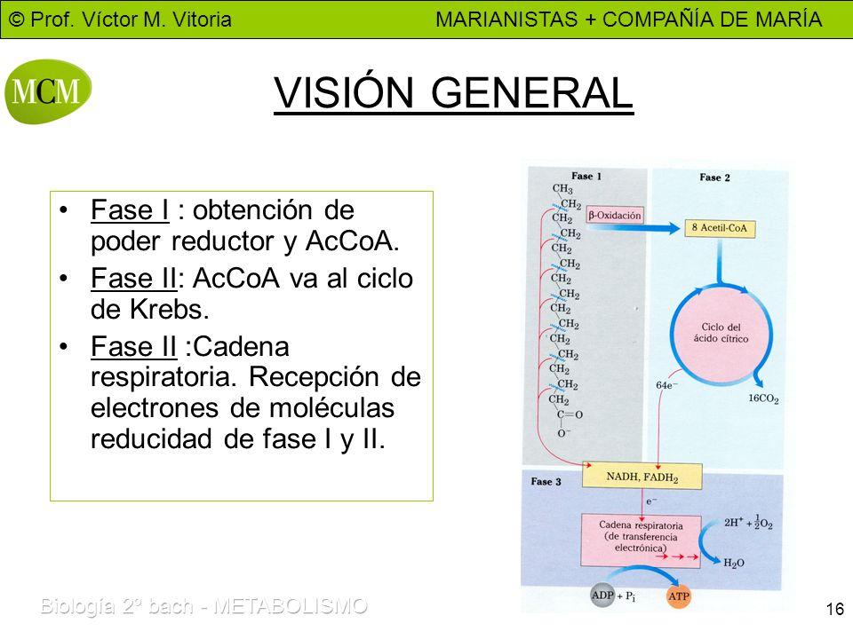 VISIÓN GENERAL Fase I : obtención de poder reductor y AcCoA.
